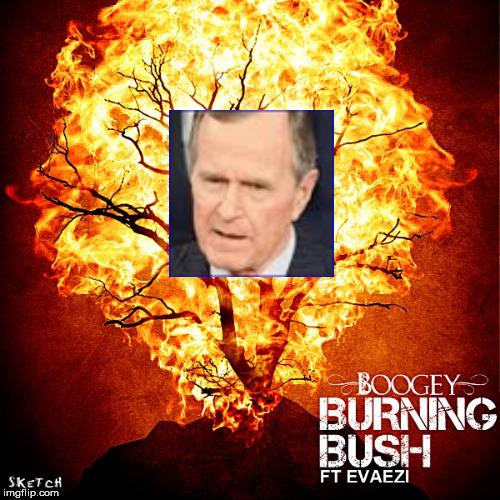 Burning Bush Bush