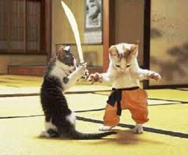 Cat Kung Fu ~
