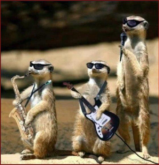 Little blues band rats ~