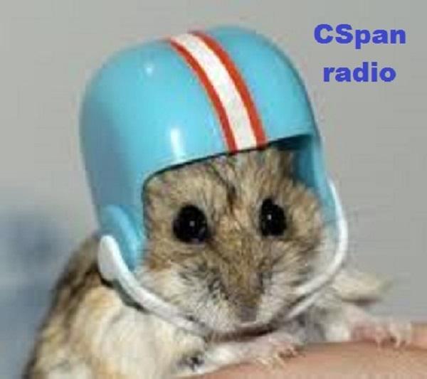 Gerbil with helmet ~ CSpan radio ~