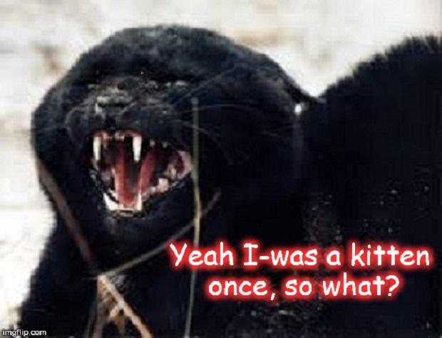 Cat ~ Yeah I-was a kitten ~
