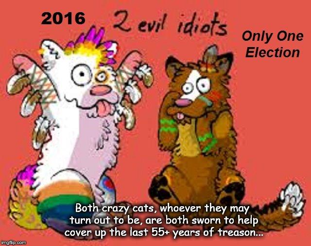 Two evil idiots ~ Cats ~ 2016