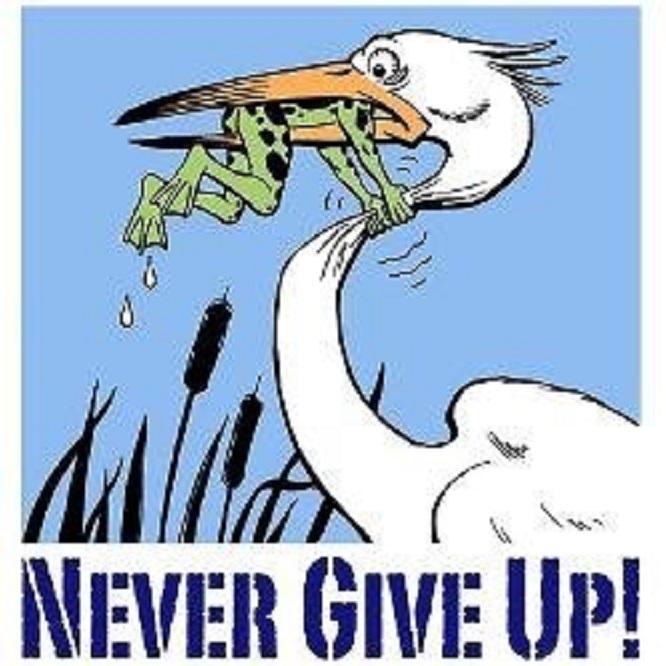 Frog versus Pelican ~ Never give up