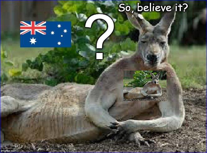 Kangaroo believe it