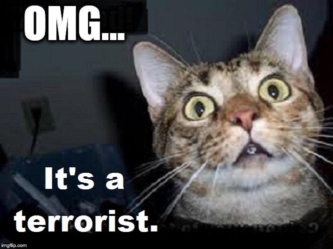 OMG Cat It's a terrorist