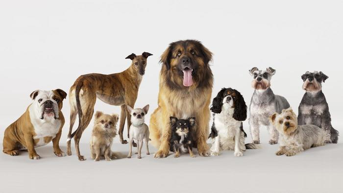 Breeds of dog