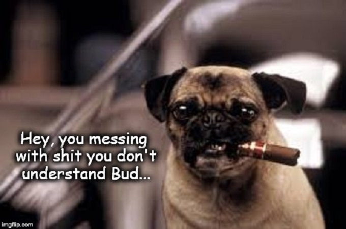 Frank the Pug dog ~ MIB ~ Shit you don't understand ~