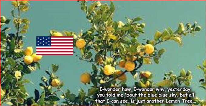 Just another Lemon Tree America
