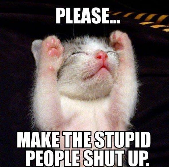 Please Stupid Cat