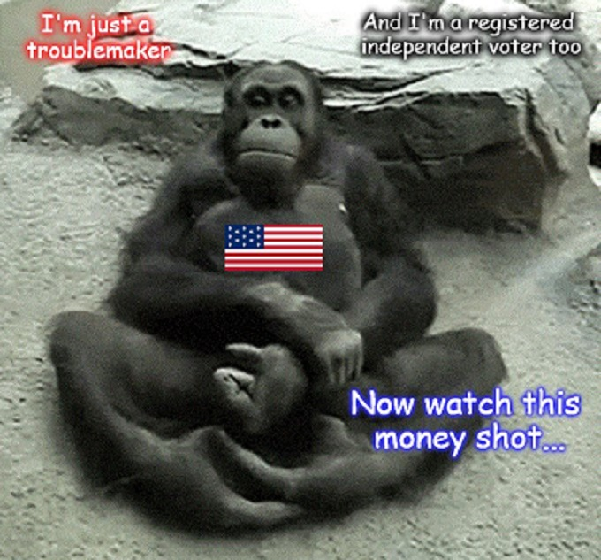 American Ape voter