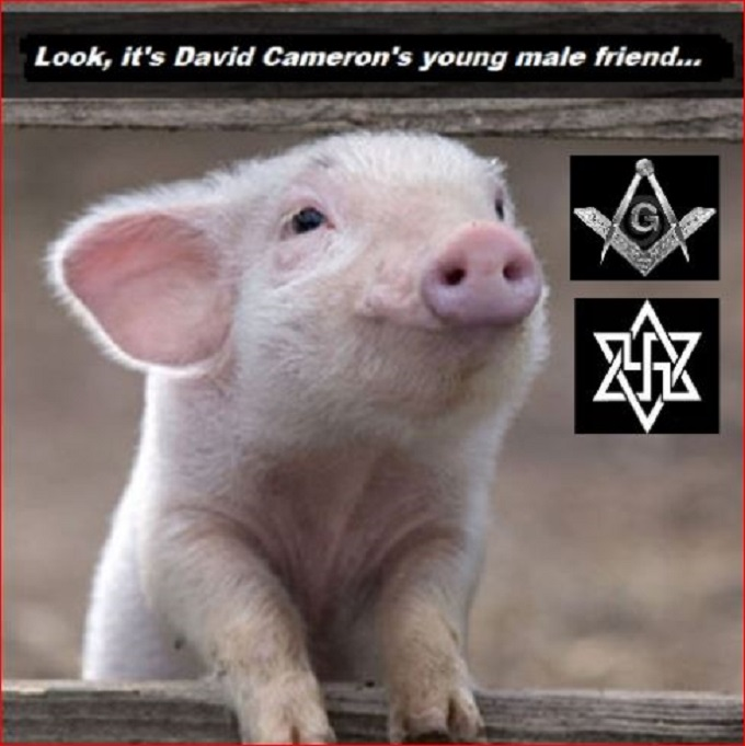 Young male pig Mason Nazi David Cameron
