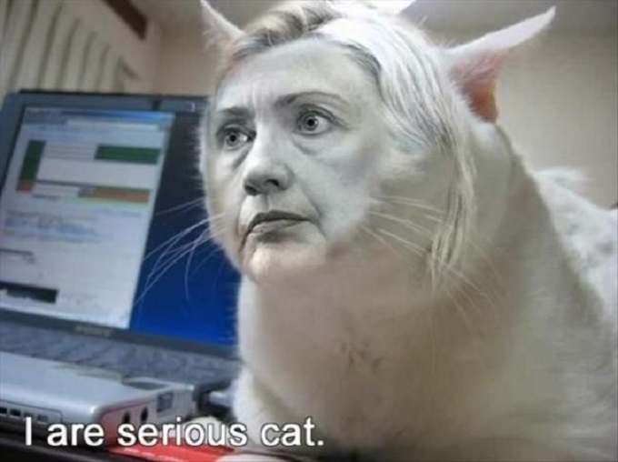 Hillary cat I-are serious
