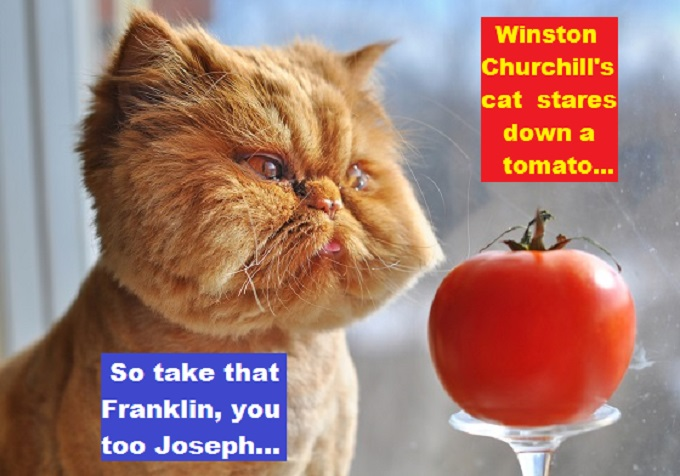 Churchill Cat Stares Down a Tomato