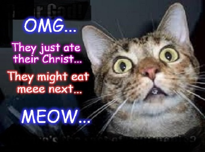 OMG Cat ~ They ate their Christ ~