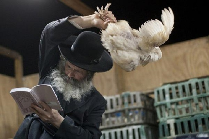 Rabbi blessing chicken
