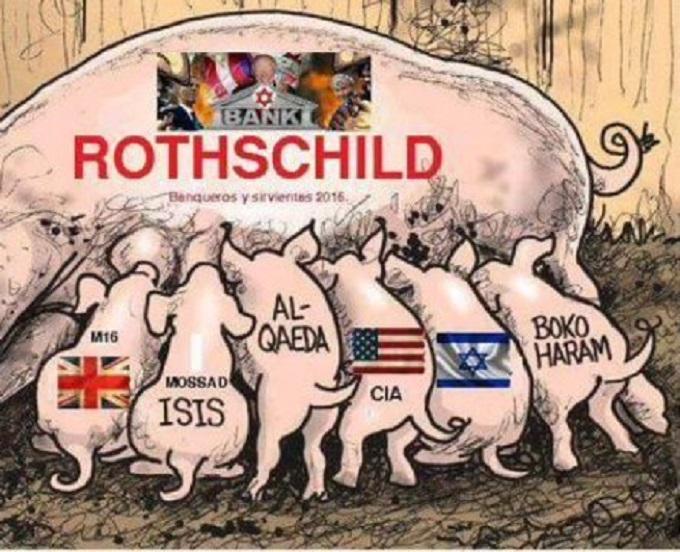 Rothschild Pigs 680