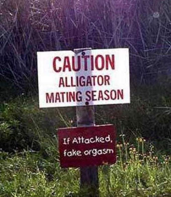 Allilgator's ass Croc