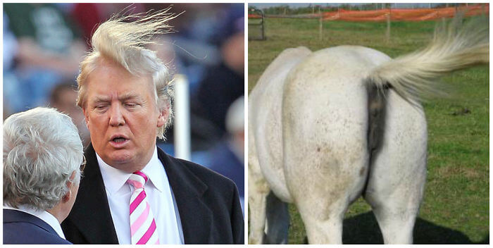 Donald Trump Horse's Ass