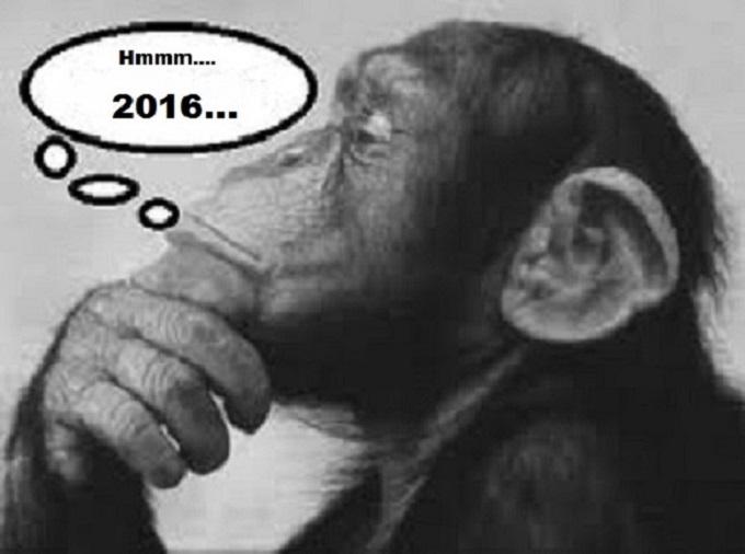 Monkey Einstein 2016
