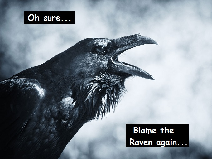 raven-Blame The spirit-animal