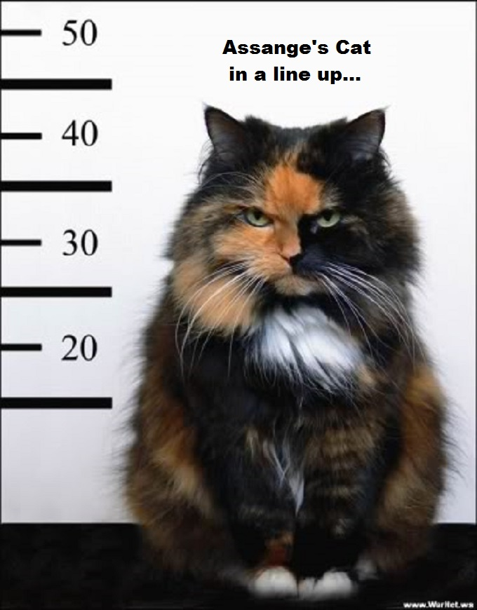 Assange's cat in a line up