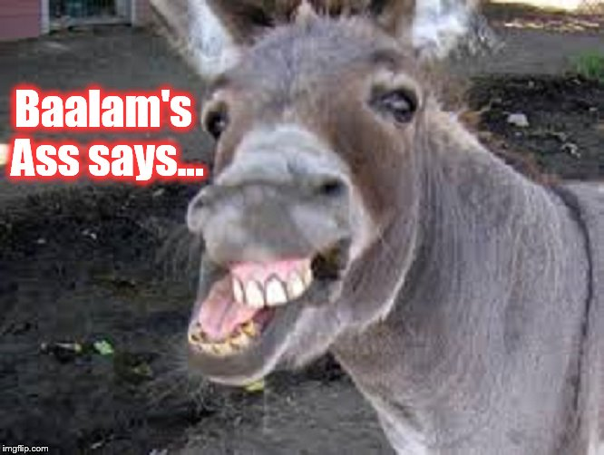 Baalam's Ass says