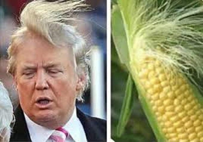 Trump corn