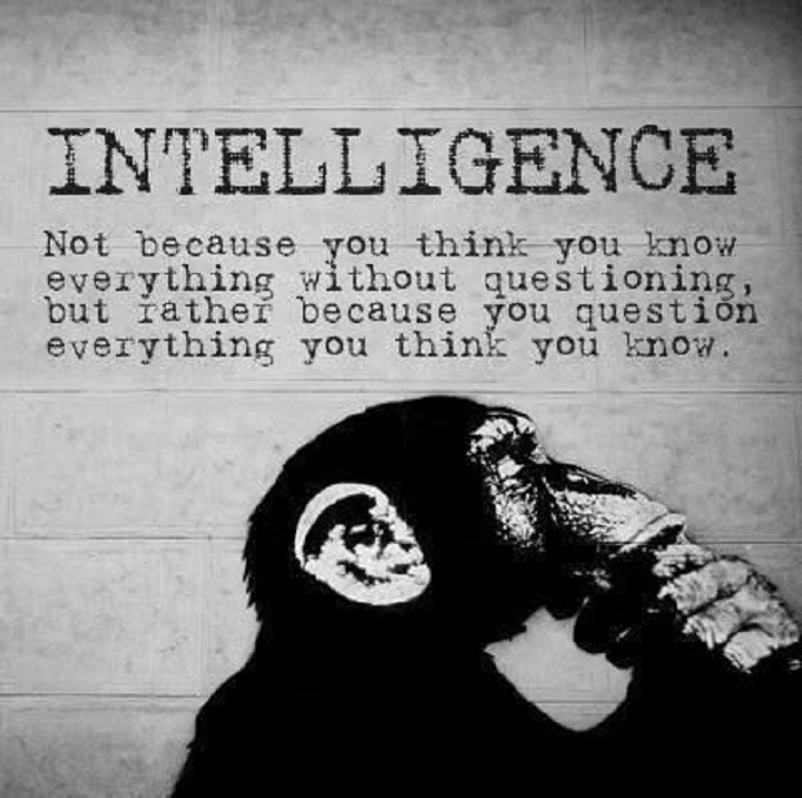 ape-intelligence-monkey