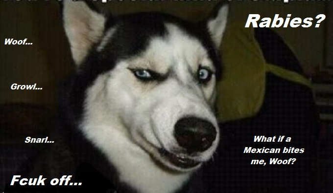 dog-looking-mexican-rabies
