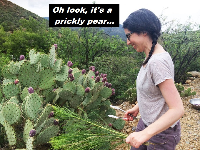 prickly-pear-oh-look