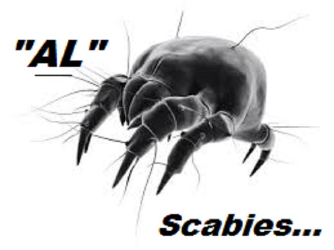 scabies-mite