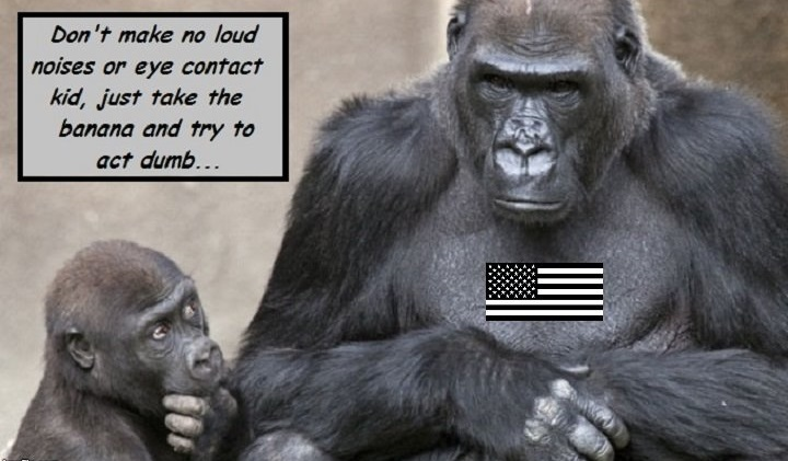 american-gorilla-banana