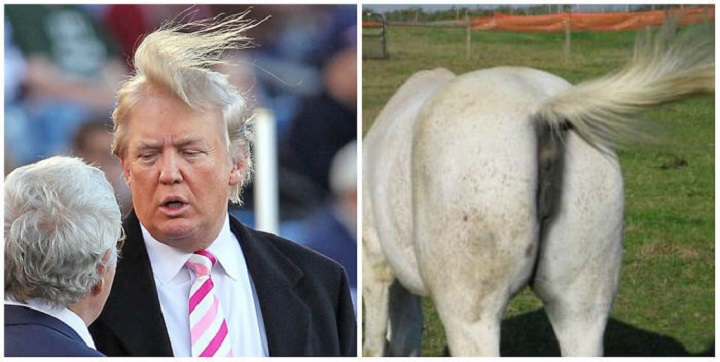 donald-trump-horses-ass