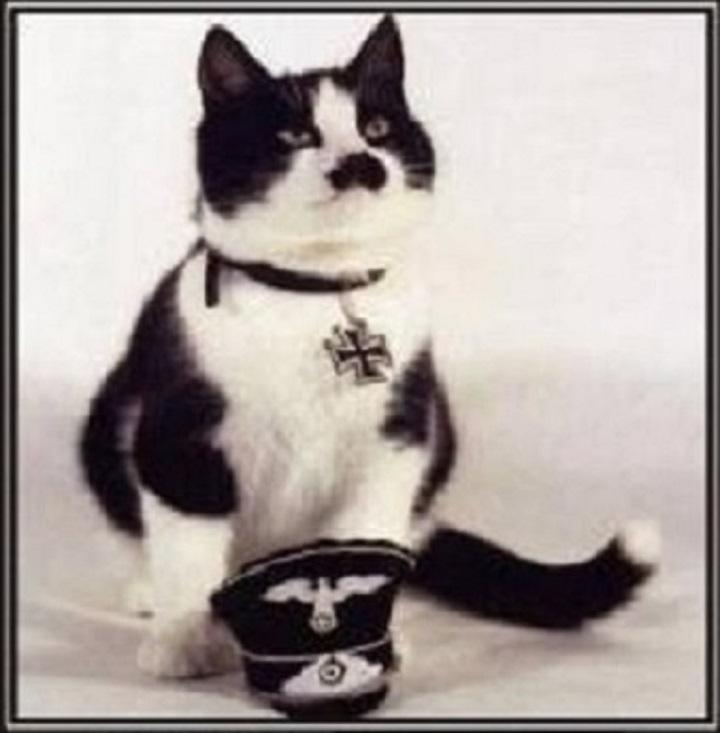 nazi-cat