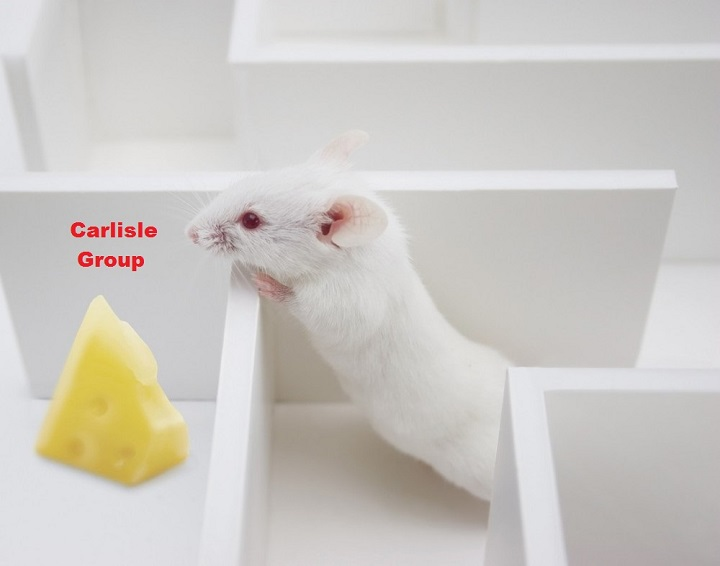 rat-in-maze-carlisle-group