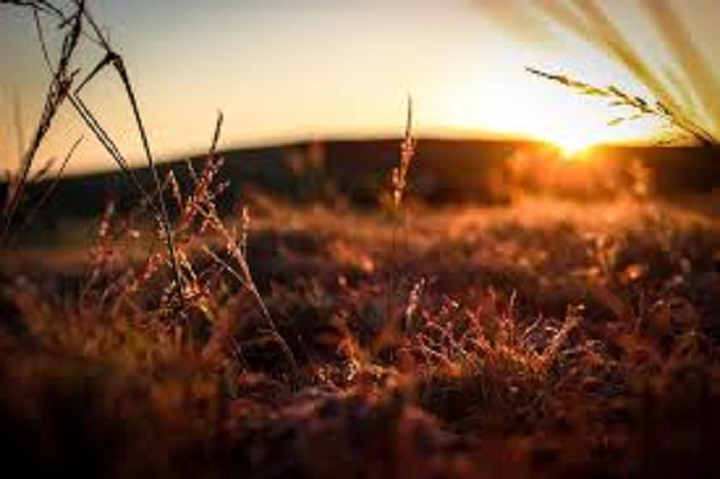 sunrise-low-shot-grass