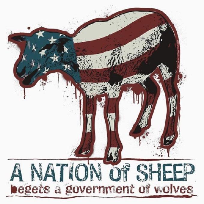american-sheep