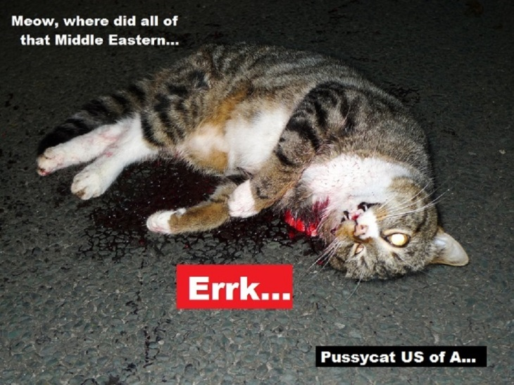 dead-cat-middle-east-gold-pussycat-us-of-a