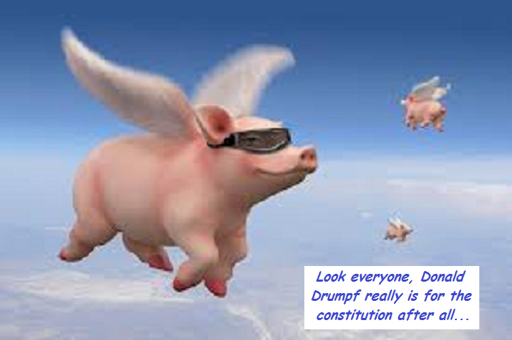flying-pigs-donald-drumpf-trump-constitution