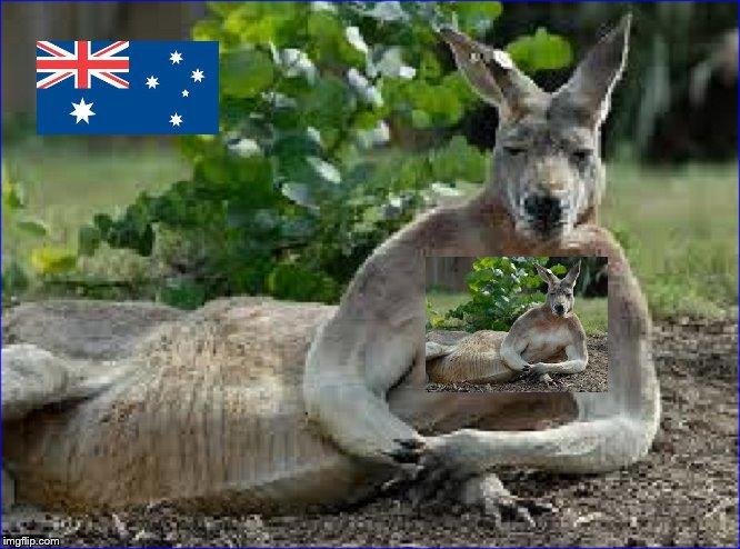 kangaroo-heart-of-australia