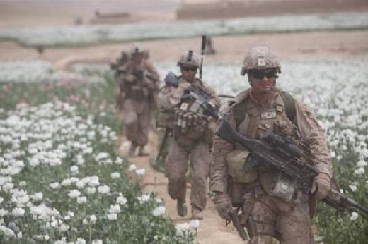 afghanistan-opium-520