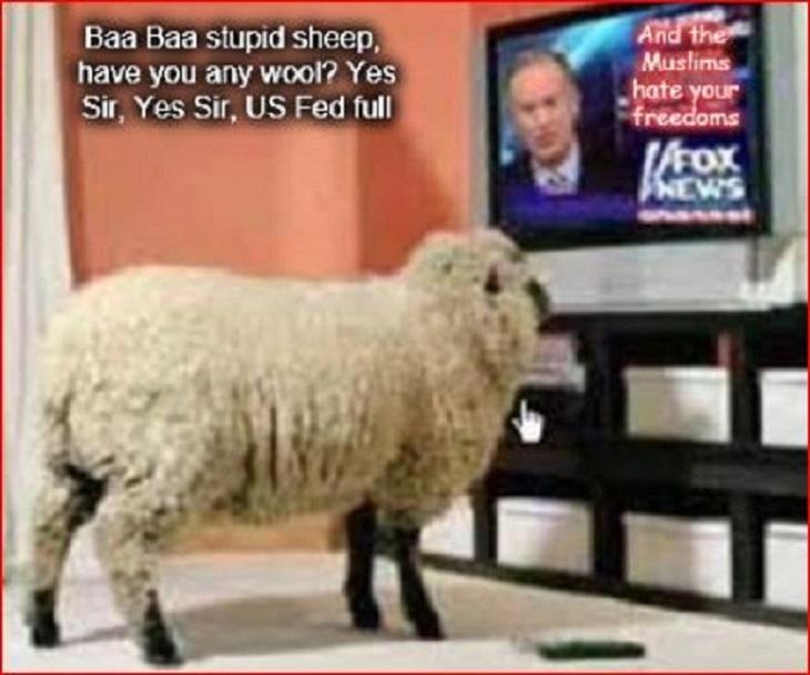 baa-baa-stupid-sheep-muslims-fox-news-us-fed