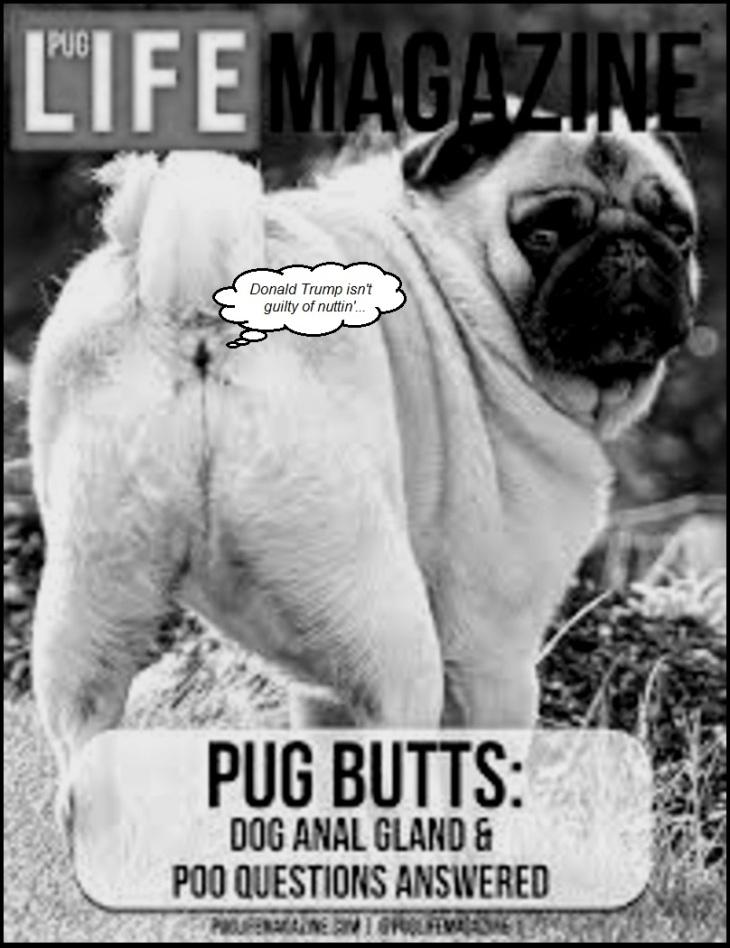 Pug Life Donald Trump BW 800